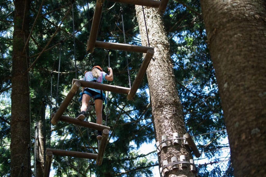 tree-climbing-Q86QGEL